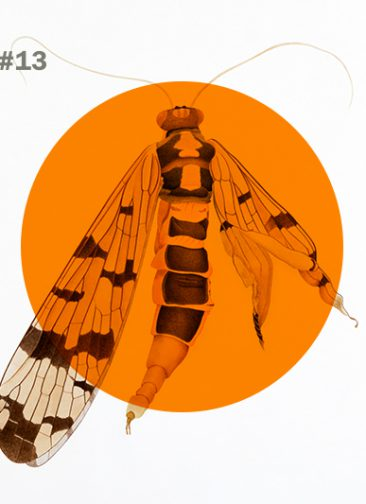 see#13.  Illustration: Cornelia Hesse-Honegger, Pro Litteris